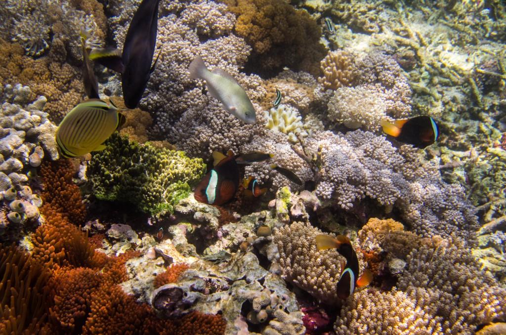 Corales y peces